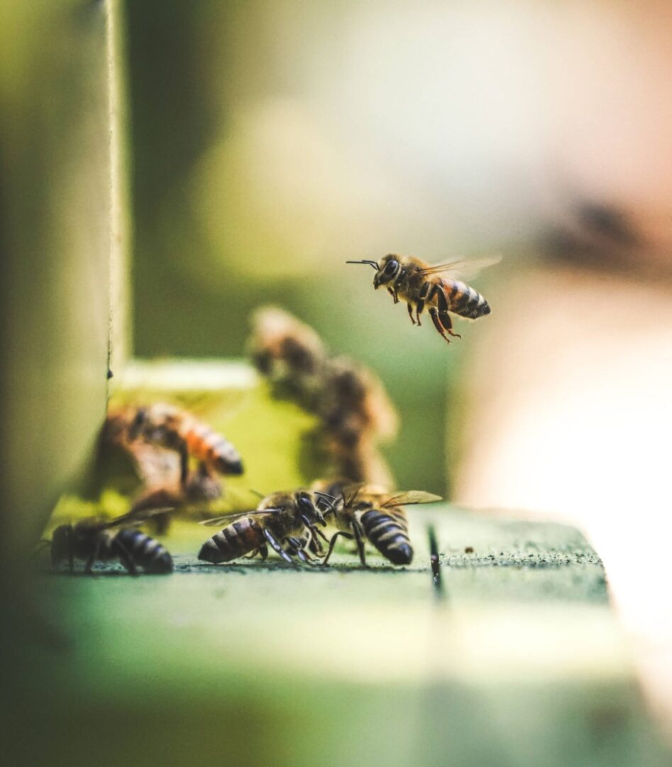 Bee & Wasp Removal Services